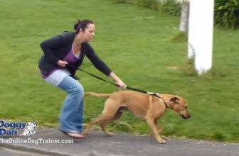 5 Videos That Will Reveal Hidden Secrets To Dog Training
