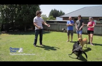 How To Train A Dog And Win Their Minds (Ultimate Solution)